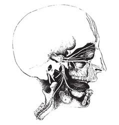 The fifth nerve vintage vector