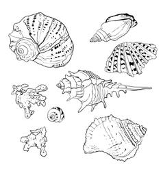 Set of hand drawn seashells vector image vector image