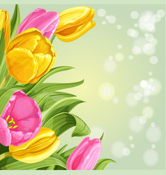 background pink and yellow tulips on white vector image