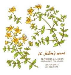 St Johns wort set vector