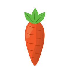 vegetable food carrot raw healthy vector image