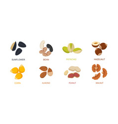 nut seed nuts set in flat design set different vector image