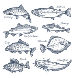 Sea fish sketch isolated icons vector