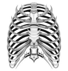 ribs of steel vector image