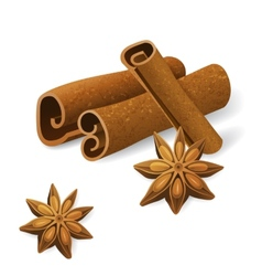 Anise and cinnamon vector image