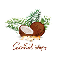Coconut and palm leaves vector
