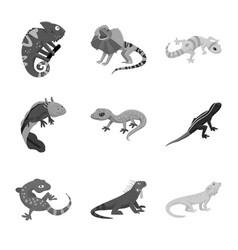 Design wild and exotic logo set wild vector