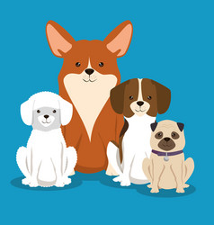 Group of dogs breds pets friendly vector