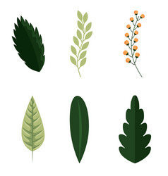set of green nature leaves vector image