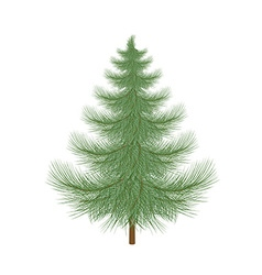 Fluffy green Christmas tree to decorate vector image