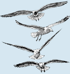 Hand drawings flying seagulls vector