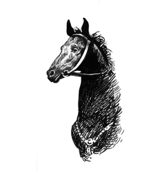 black ink hand drawn horse vector image vector image