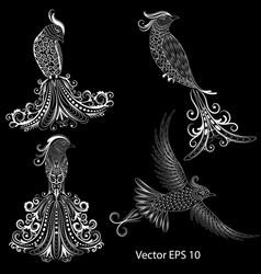 Drongo vector