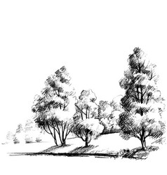 Forest sketch beautiful garden hand drawing vector