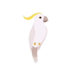 little cockatoo bird cute birdie home pet vector image
