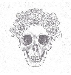 vintage hand drawn skull with roses vector image