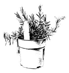 Hand drawn rosemary vector image vector image
