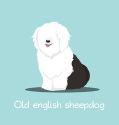 cute old english sheepdog graphic design vector image