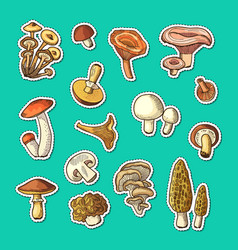 hand drawn mushrooms stickers set vector image