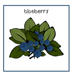 icon blueberry with leaves vector image