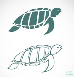 image of an turtle vector image