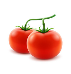 Ripe red whole tomatoes on branch isolated vector