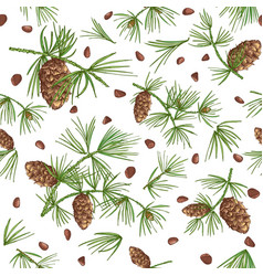 seamless pattern with color cedar branches and vector image