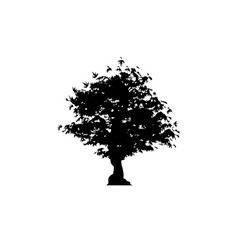 silhouette maple tree icon isolated vector image