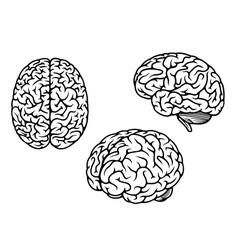 Human brain in three planes vector image