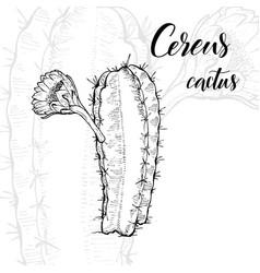 Hand drawn cereus cactus vector