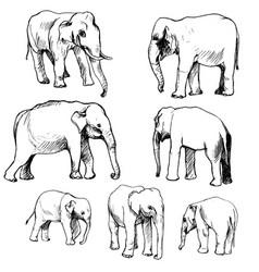 set elephants vector image