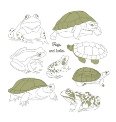 Set with frogs and turtless vector