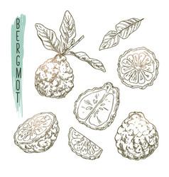 sketch of bergamot elements set of citrus vector image