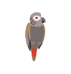 african grey parrot bird cute birdie home pet vector image