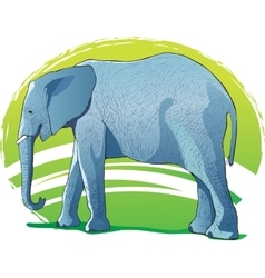 Elephant on the green background vector