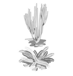 Set of extinct discolored algae isolated on white vector