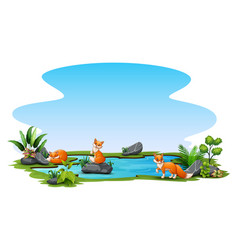 three foxes playing in small pond vector image