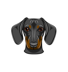 funny cartoon dachshund dog head vector image