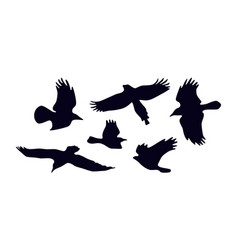 set soaring birds silhouettes vector image