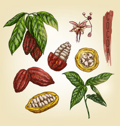sketch of cocoa elements colourful vector image vector image