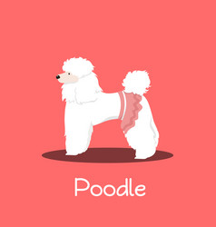 a cute poodle dog cartoon on pink background vector image vector image