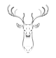 Male deer with horns head vector image vector image