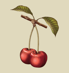 cherry hand drawing vintage engraving vector image