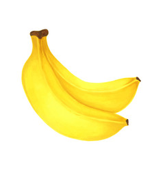 Hand drawn markers painting fruit banana on white vector