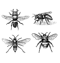 Set bee engraved vintage hand drawn in vector