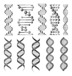 symbols of dna helix or molecular chain vector image