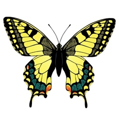 Colorful machaon butterfly vector