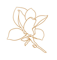 Magnolia flower with branch in gold color vector