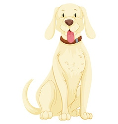 Pet dog with white fur vector image