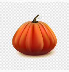 stock pumpkin isolated on a vector image